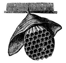 Hanging Hornet Nest Vintage Il...