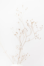 Delicate Dry Grass Branch On W...