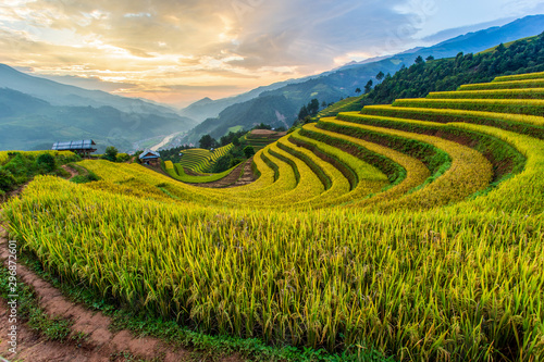 Poster Les champs de riz Green terraced rice fields at Mu Cang Chai