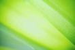 Green leaf on blurred greenery background. Beautiful leaf texture in sunlight. Natural background. close-up of macro with free space for text.
