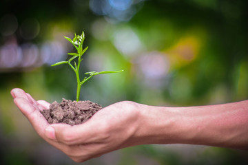 A hand holding a tree that is planted in the soil