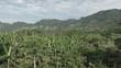 Aerial Cacao Farm