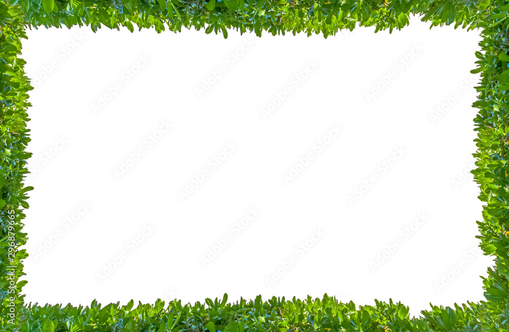 Fototapety, obrazy: frame made of green grass isolated on white