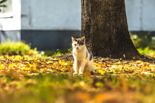 Cat In The Autumn And Bright M...