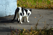 A Black And White Cat Is Waiti...