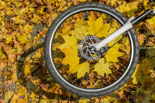 Pinturas sobre lienzo  Bicycle wheel with yellow maple leaves in autumn sunny day