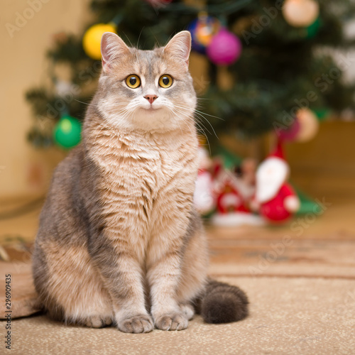 Cadres-photo bureau Chat Smiling cat on a blurry background with a Christmas tree and a luminous garland.