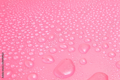 Close up water drops on pink background, Water drop in macro photography - 296909823
