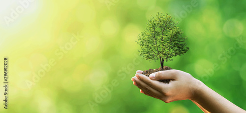Wall Murals Plant Tree planting on volunteer family's hands for eco friendly and corporate social responsibility campaign concept