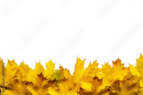 Jesienne liście na białym tle Canvas Print