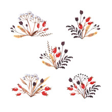 Collection Of Watercolor Herbal Compositions Isolated On White Background. Winter Dried Herbs, Leaves And Dog-rose Berries. Hand Drawn Clipart. Perfect For Invitations, Greeting Cards, Postcards.