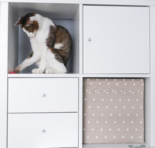 A White And Striped Cat Sitting On A White Shelf Or Inside A Rack. Pets In A House Concept. A Cat Is Playing A Pencil.