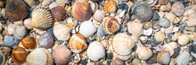 Shell Background. Colorful Shells On The Sand Beach. Space For Text. Header. Banner.
