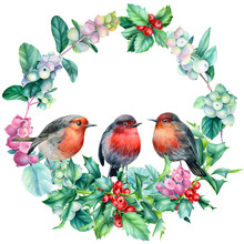 Winter Wreath, Beautiful Robin Birds  Watercolor On A White Background, Christmas Composition Of Pine Cone, Holly, Snow Berries. New Year Holiday