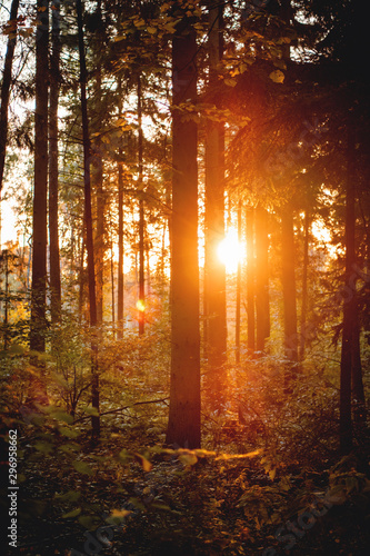 Montage in der Fensternische Braun Deep dark and mysterious autumn winter beech forest with colorful golden leaves from autumn and colorful golden evening sunshine glow from sunset. Harz National Park, Germany
