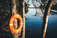 Life Buoy On A Tree In A Forest Near A Forest Lake