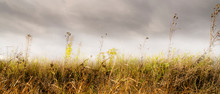 A Yellowed Field Against A Gloomy Cloudy Sky. Autumn Beautiful Natural Background.