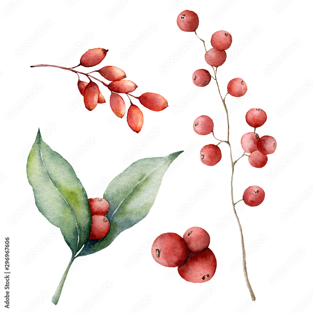 Fototapety, obrazy: Watercolor red berries set. Hand painted winter plants with leaves, branches and berries isolated on white background. Floral illustration for design, print, fabric or background. Botanical set.