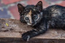 Kitten, Laos