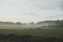 Red Deer Sunrise Landscape