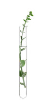 Green Plant In Test Tube On White Background