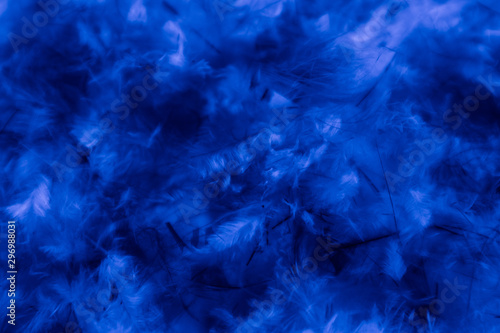 Fotobehang Fractal waves Beautiful abstract blue pink feathers on darkness background and colorful purple feather texture pattern