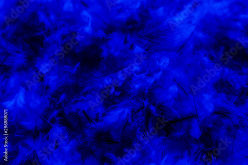 Beautiful abstract blue pink feathers on darkness background and colorful purple Canvas Print
