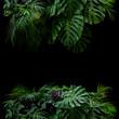 canvas print picture - Tropical leaves foliage rainforest plants bush floral arrangement nature frame backdrop on black background.