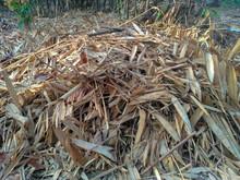 Piles Of Dried Bamboo / Bambus...