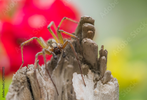 Photo A big spider is sitting on a piece of wood