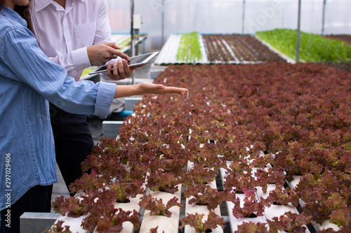Hydroponic farm with technology, researcher, agricultural expert introduce owner Poster Mural XXL