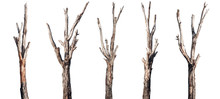 Trees' Trunk Collection Isolat...