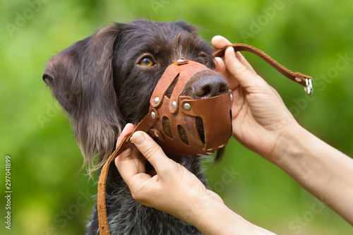 Foto human hands put on a muzzle to muzzle a dog