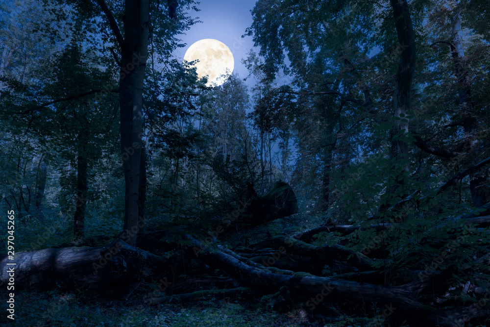 Fototapeta At night at full moon in the forest. There are fallen tree trunks in this natural forest and are romantically illuminated by the moonlight.
