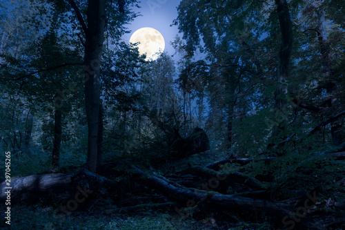 Obraz At night at full moon in the forest. There are fallen tree trunks in this natural forest and are romantically illuminated by the moonlight. - fototapety do salonu