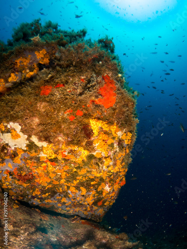 Fototapety, obrazy: seabed with corals and macro