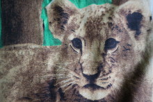 Painting Of A Lion Cub Sitting