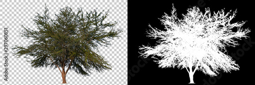 Foto auf Gartenposter Weiß Isolated single tree with clipping path and alpha channel on a transparent picture background. Big tree large image is easy to use and suitable for all types of art work and print.