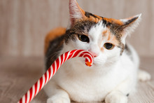 Colorful Cute Cat Curiously Sn...