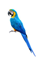 Full Body Of Blue-and-yellow O...
