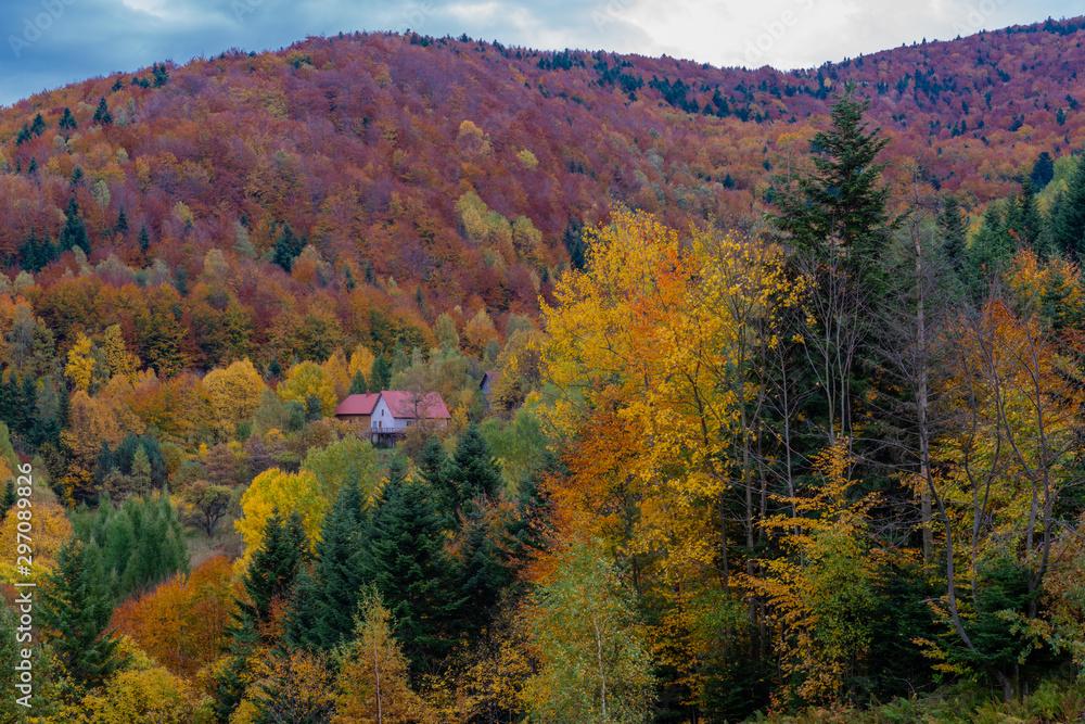 Golden Polish Autumn landscape na Oslaku