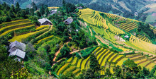 Landscape View Of Rice Fields ...