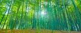 太陽の輝きと竹林