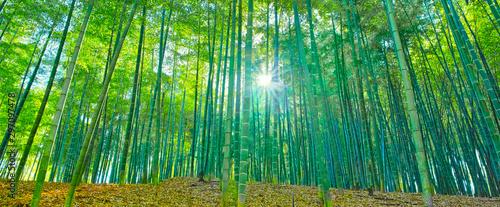 Photo 太陽の輝きと竹林