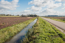 Dutch Polder Landscape With A Ditch