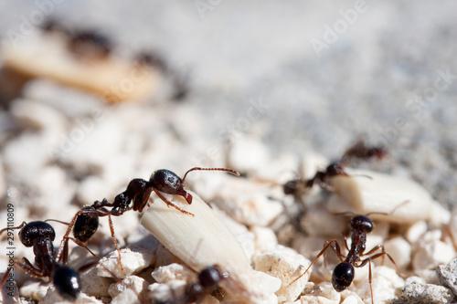 Photo macro photographed ant image