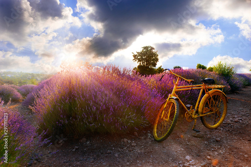 Foto auf Leinwand Fahrrad yellow bicycle in the lavender fields