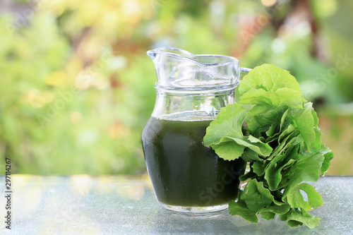 Photo  Gotu kola , Asiatic pennywort, Indian pennywort  juice in jar with green blur background