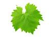 Leinwandbild Motiv Fresh green leaf of grape isolated on white background.