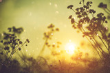 Nature backdrop. Beautiful Meadow with wild flowers over sunset sky. Beauty nature field background with sun flare. Bokeh, Silhouettes of wild grass and flowers